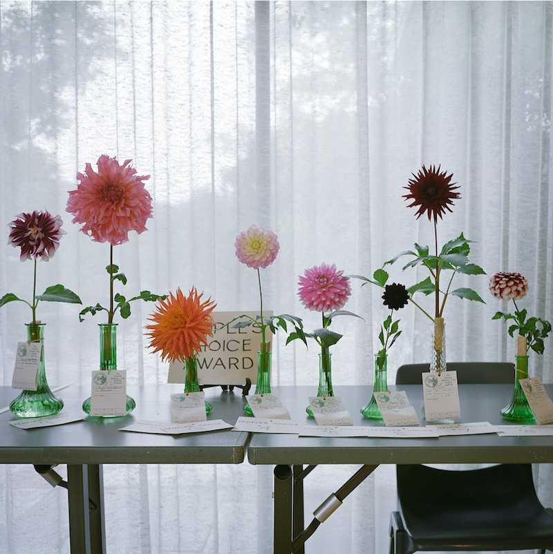 Dahlias, Loose Park, Kansas City  by Mike Sinclair | Archival Pigment Print
