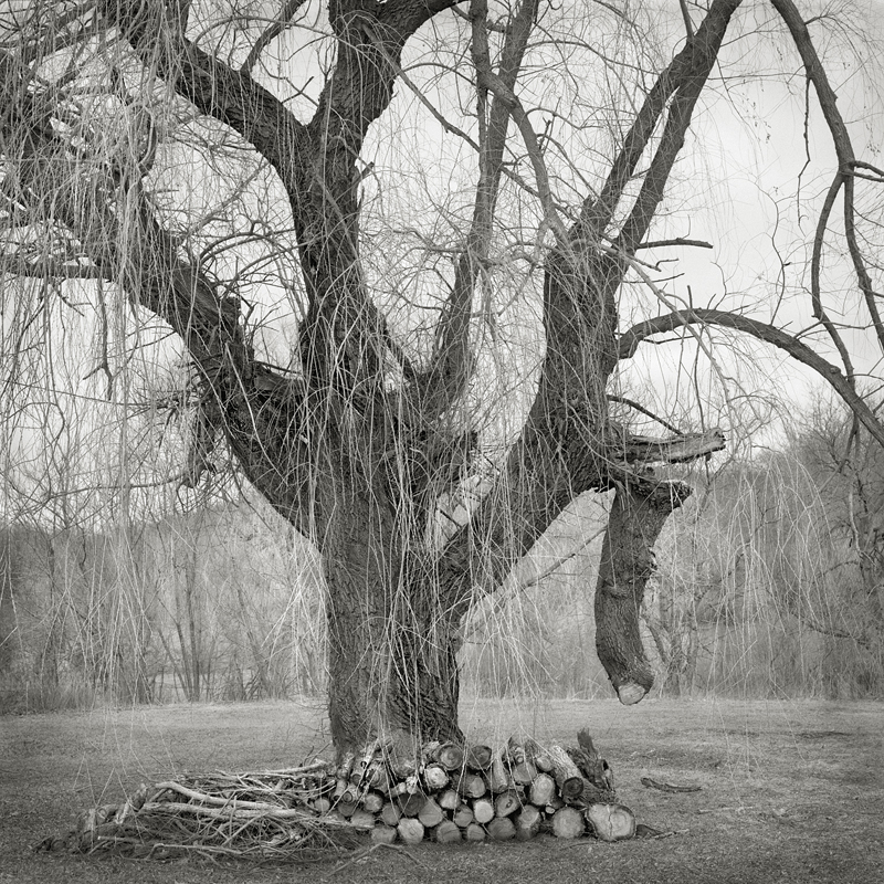 Broken Tree  by Beth Dow | Platinum-Palladium Print