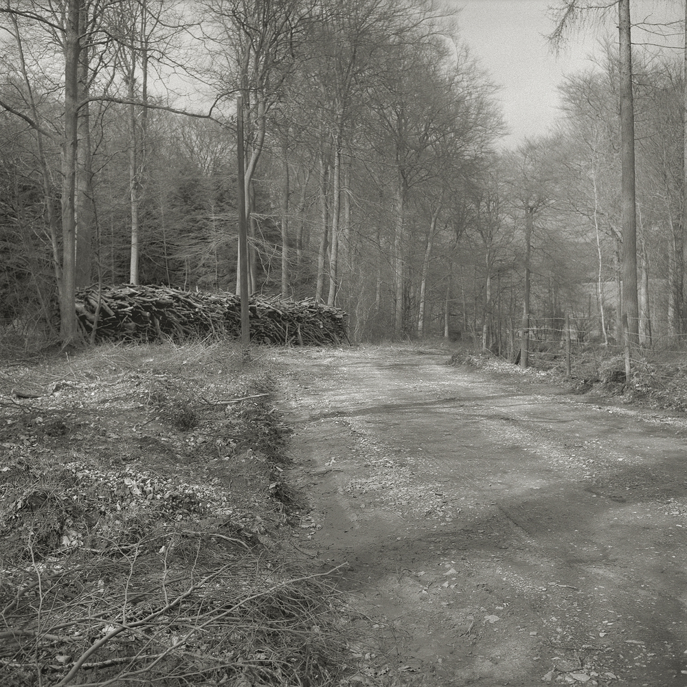 Wood Pile and Road  by Beth Dow | Platinum-Palladium Print