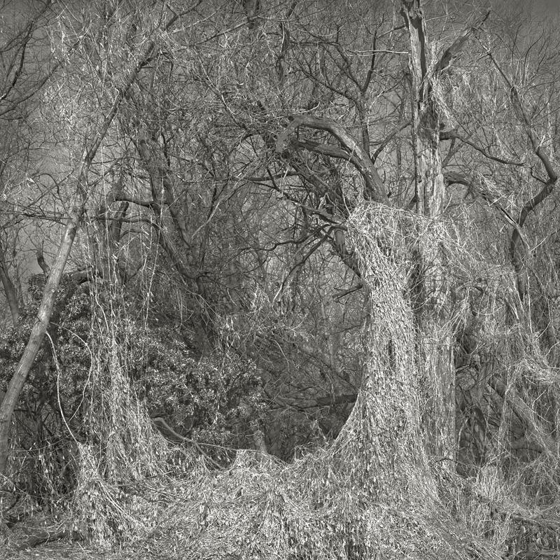 Sling by Beth Dow | Platinum-Palladium Print