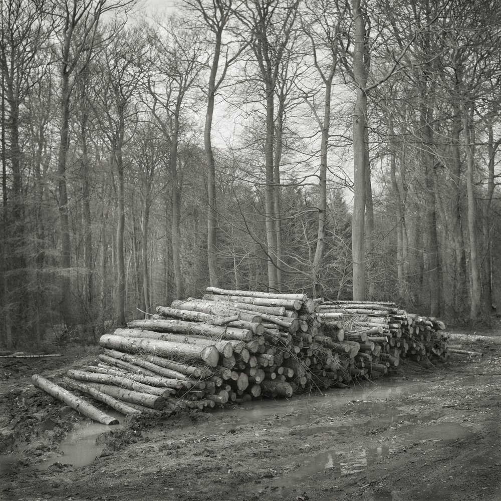 Woodpile  by Beth Dow | Platinum-Palladium Print