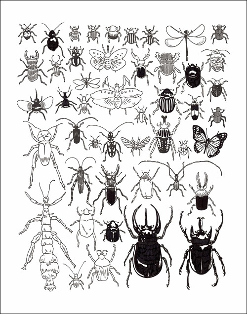 Insects   by Jason Polan | Ink on Paper