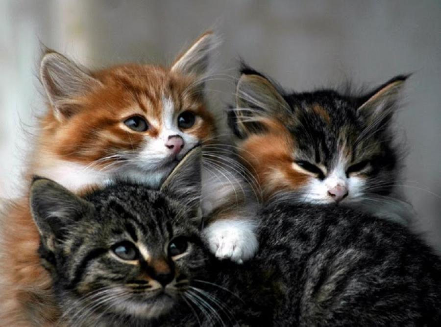 3 Cats.jpg