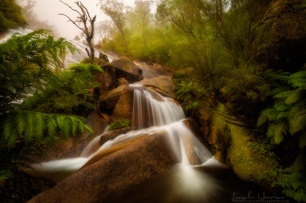 fog descends over eurobin falls on mount buffalo