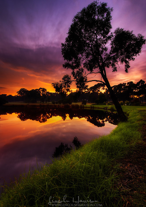 sunrise reflections in a small lake on eaglehawk golf course