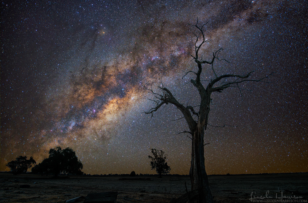 maldon tree milky way