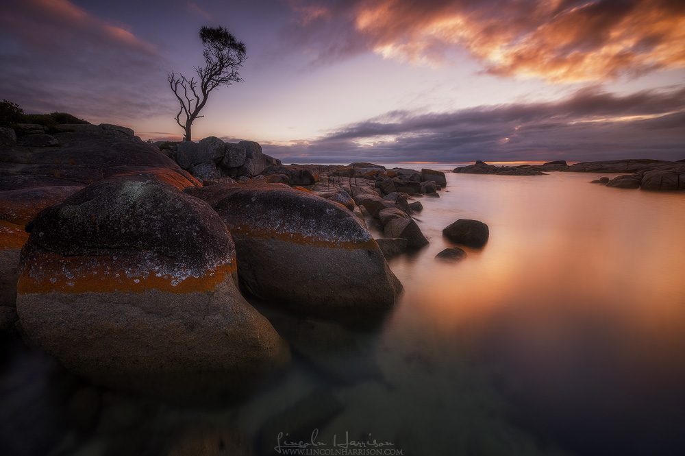 lone tree bay of fires tasmania