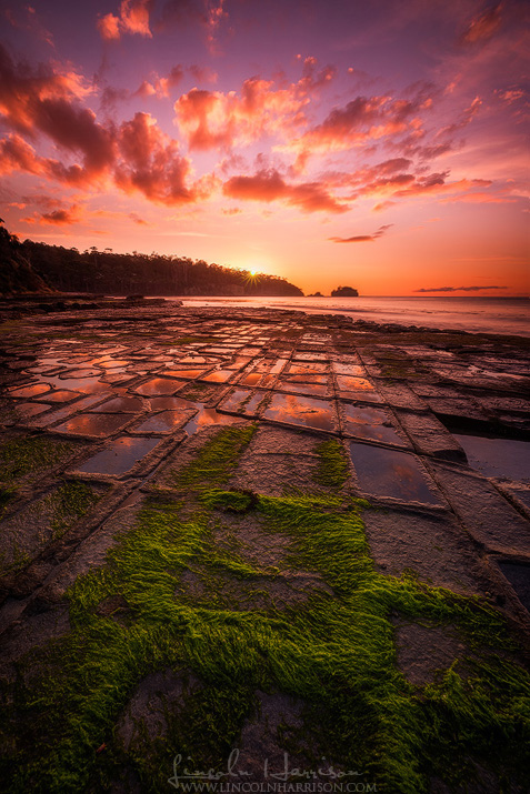 tessellated pavement eaglehawk neck tasmania