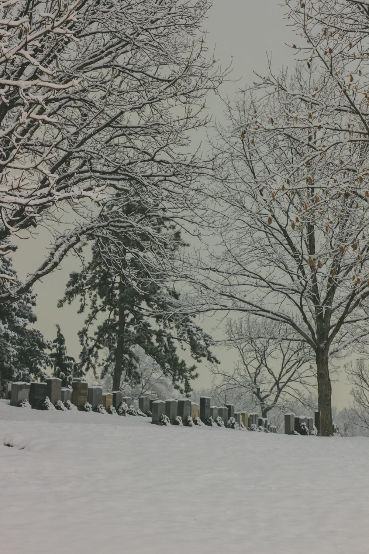 snow-29.jpg