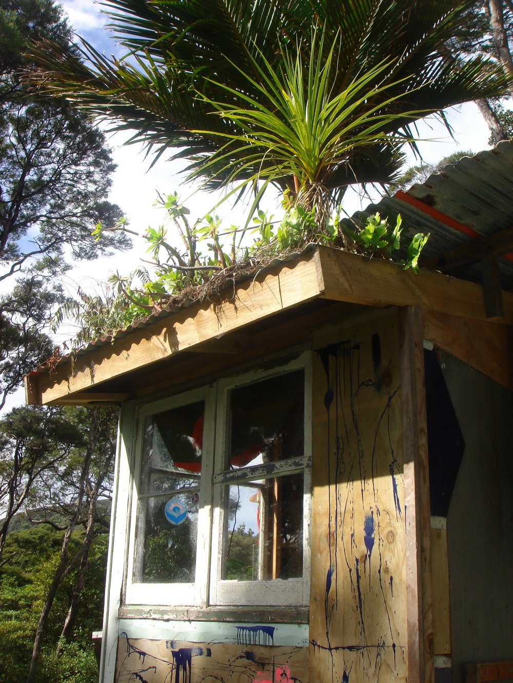 12 Domestic green roof Great Barrier Island, NZ, photograph courtesy of Zoe Zimmerman.JPG
