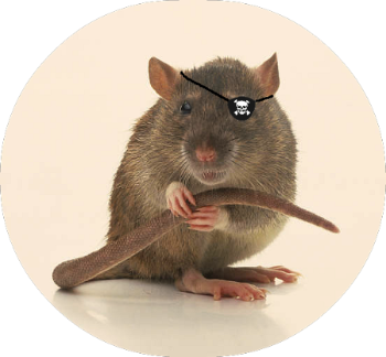 Jynx The One-Eyed Rat.png