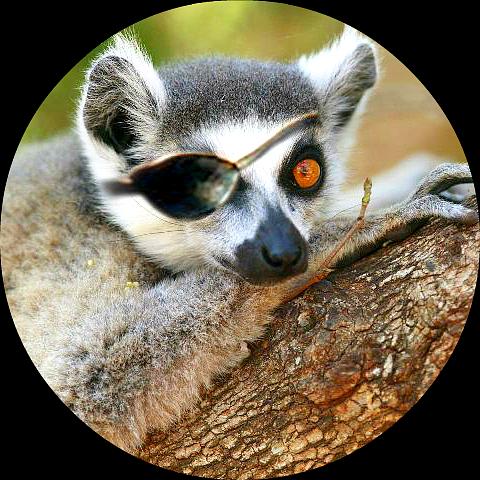Leonardo di Lemur Final.png