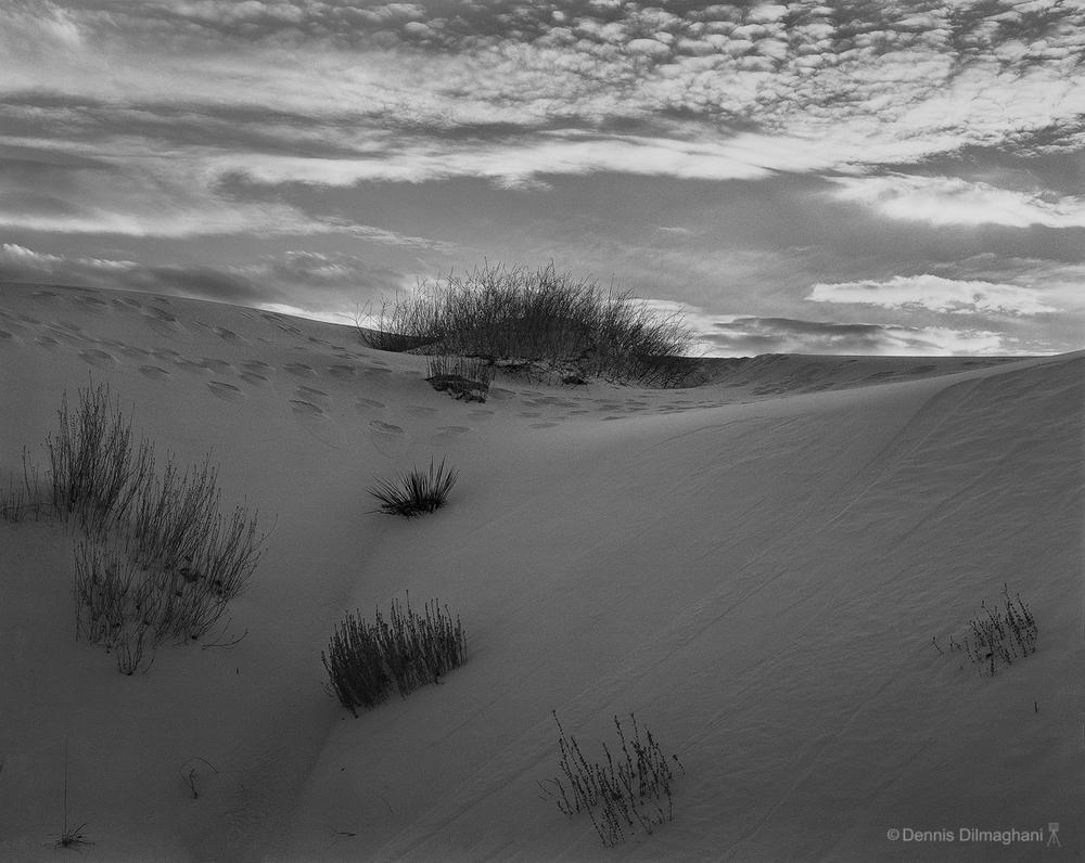NM_WhiteSands_dune-bush_45scan503_rv3_sharp_1256x1000px.jpg