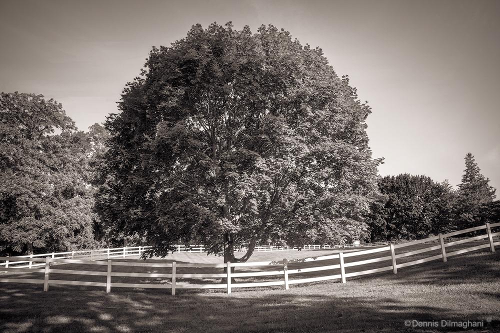 NY_ShelterIsl_Tree&Fence_DSC7209_1000x666px.jpg