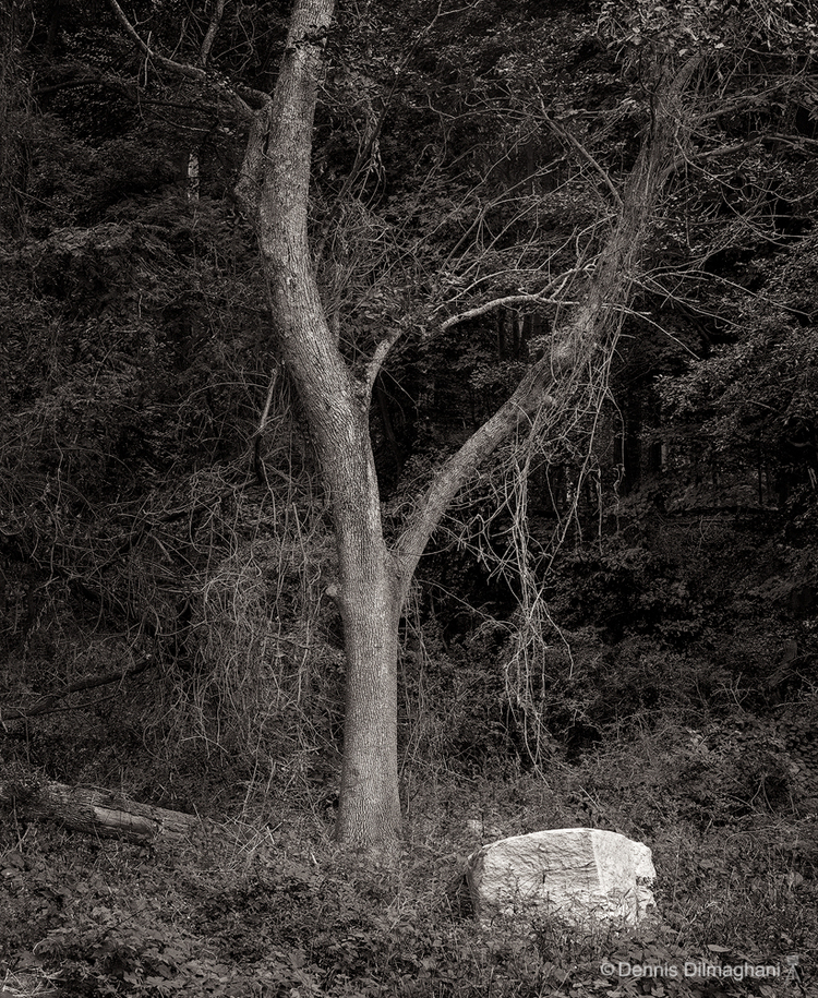 Tree & Rock, Greenwich, CT