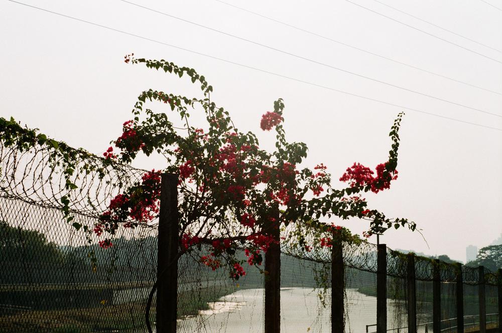 Sheung Yiu_Shenzhen_18.jpg