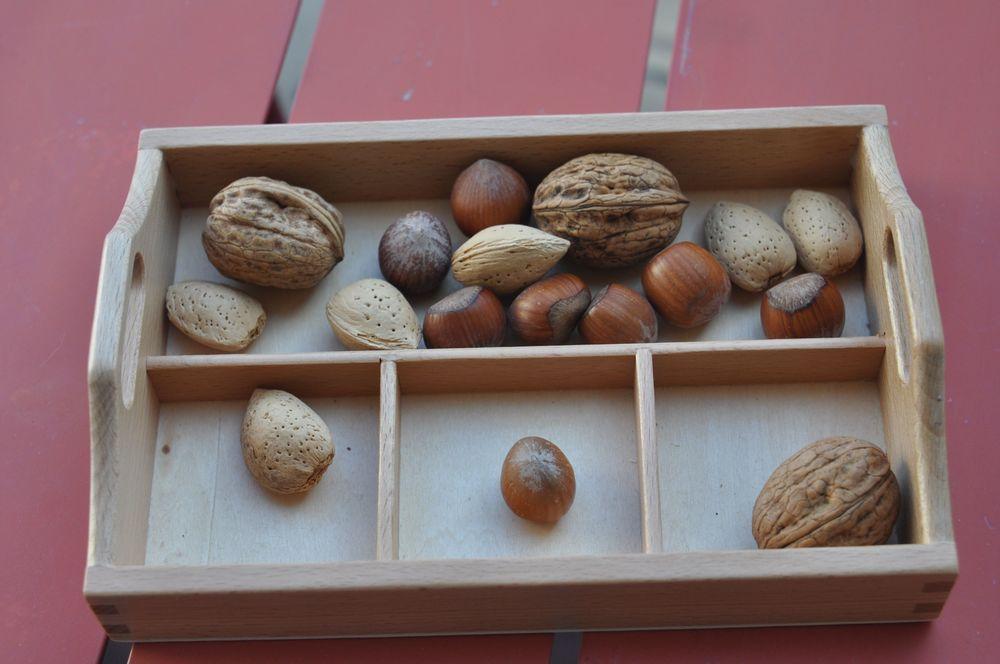 Des noix, noisettes et amandes proposées dans un plateau de tri