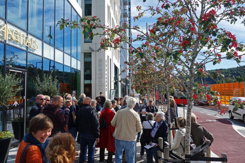 """Folk koser seg på """"botanisk safari"""" i Dronning Eufemias gate i Oslo. Treet er en norsk rogn (Sorbus aucuparia 'Stord'). Foto: Dronninga Landskap."""