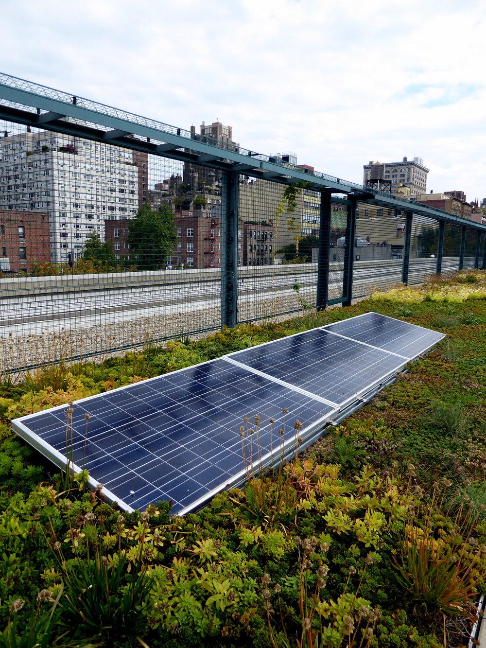 Solceller i kombinasjon med grønne tak gir mer effektiv energiproduksjon enn solceller alene. Foto: Aloha Jon