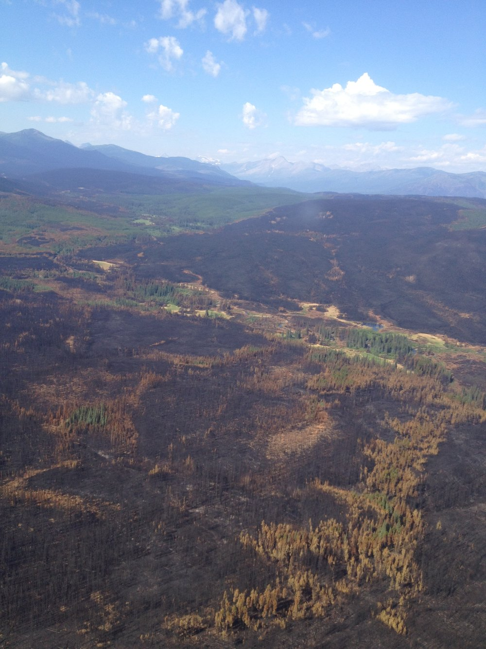 An Aerial view of the burn pattern of wildfire near Tumbler Ridge,BC.
