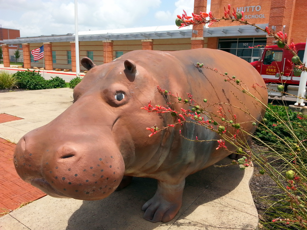 Hutto's Mascot, Henrietta the Hippo