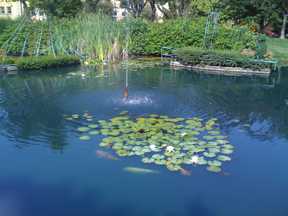 The park's koi pont /  photo courtesy of the Friends of the Topiary Park