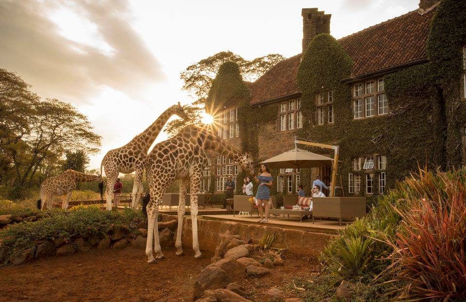 Say hi to the giraffes that part of this luxury hotel.
