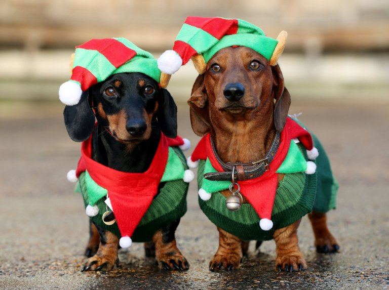 500 Sausage Dogs Gathered in Hyde Park