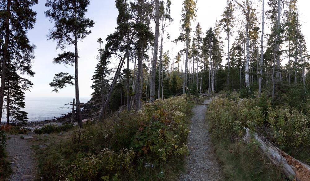 Forest 1_sm.jpg