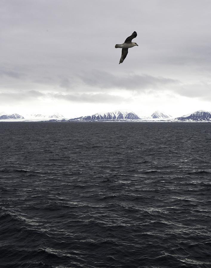 Arctic_2719.jpg