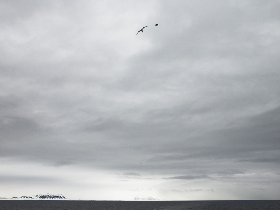 Arctic_2723.jpg