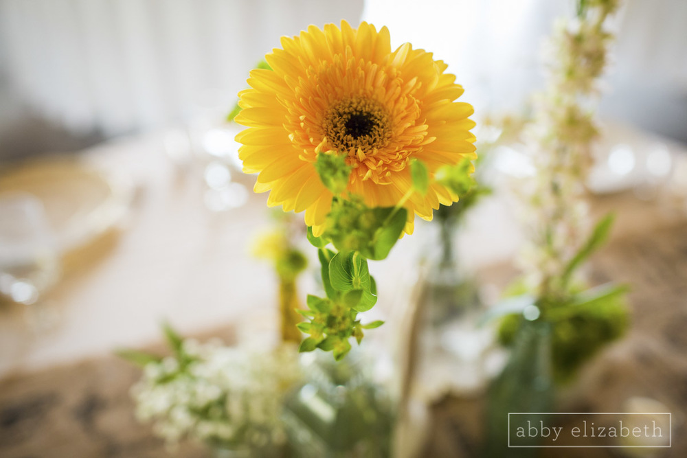Abby_Elizabeth_Photograhy_Asheville_wedding_claxton_farms123.jpg