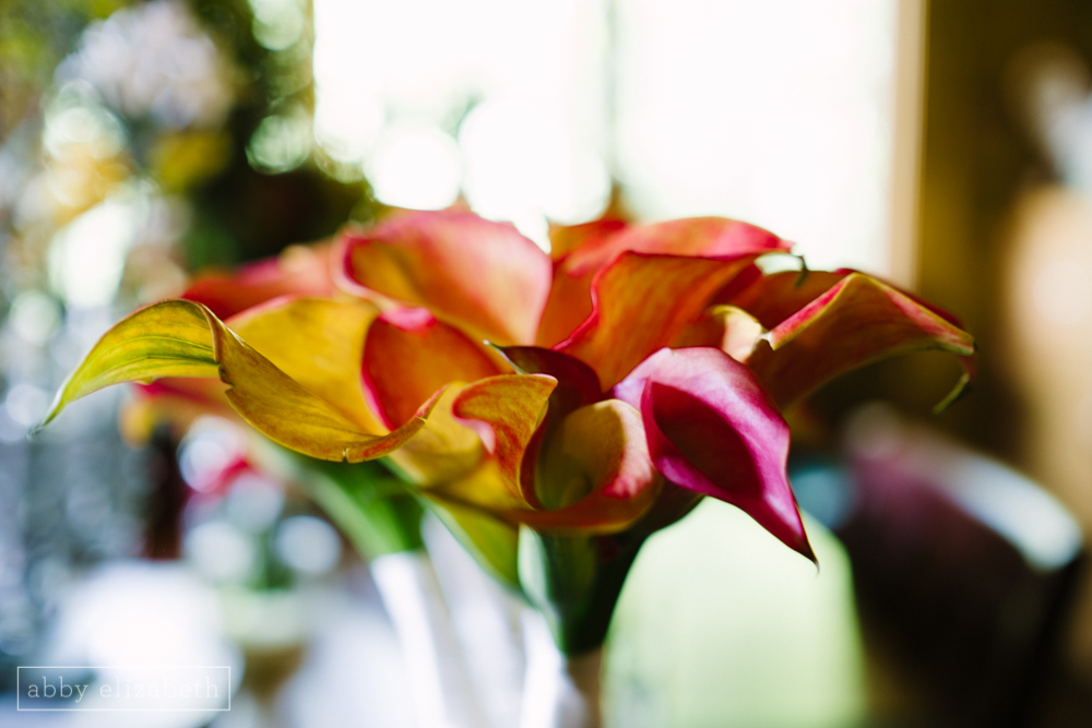 Storybrook_Farm_Wedding_Abby_Elizabeth_Photography006.jpg