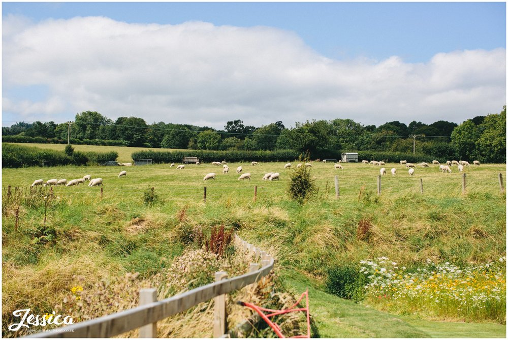 Sheep in the fields surrounding Tower Hill Barns wedding venue in North Wales