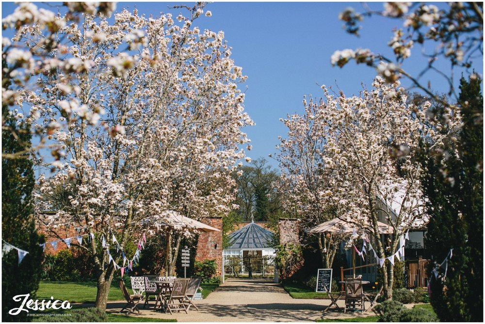 the glass house at Combermere Abbey, lined with blossom trees