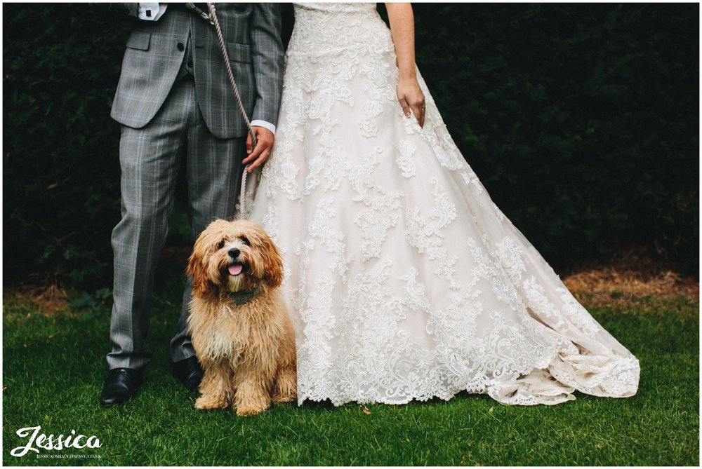 close up of dog stood in front of bride & groom