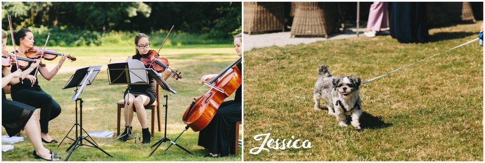 violinists play to the wedding guests in the sunshine