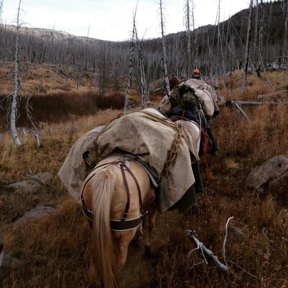 So begins the photos from my week covering an elk hunting trip near Trappers Lake in Colorado. The horse in front of me is carrying my bags. This later became my favorite horse. He was getting on in years, had no back teeth and was incredibly slow. The boys called him The Palimino until I named him Peanut.  #kaylinngilstrapphoto #thewest#intothewild #wildernesscamping#packingitin #gettingaround #peanut