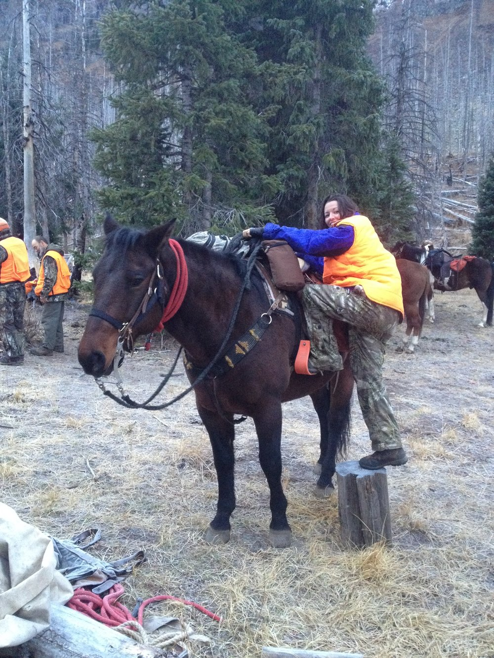 This is Woody. He is a very tall horse that required me finding a stump, rock, helping hand, whatever I could to crawl on his back. He was my mode of transportation for 3 of the 7 days hunting and camping. He delivered me across many miles and crazy switchbacks I just pretended didn't exist. I requested a Shetland pony for next year.   #woody#wildernesscamping #elkhunting#kaylinngilstrapphoto #thewest #horse