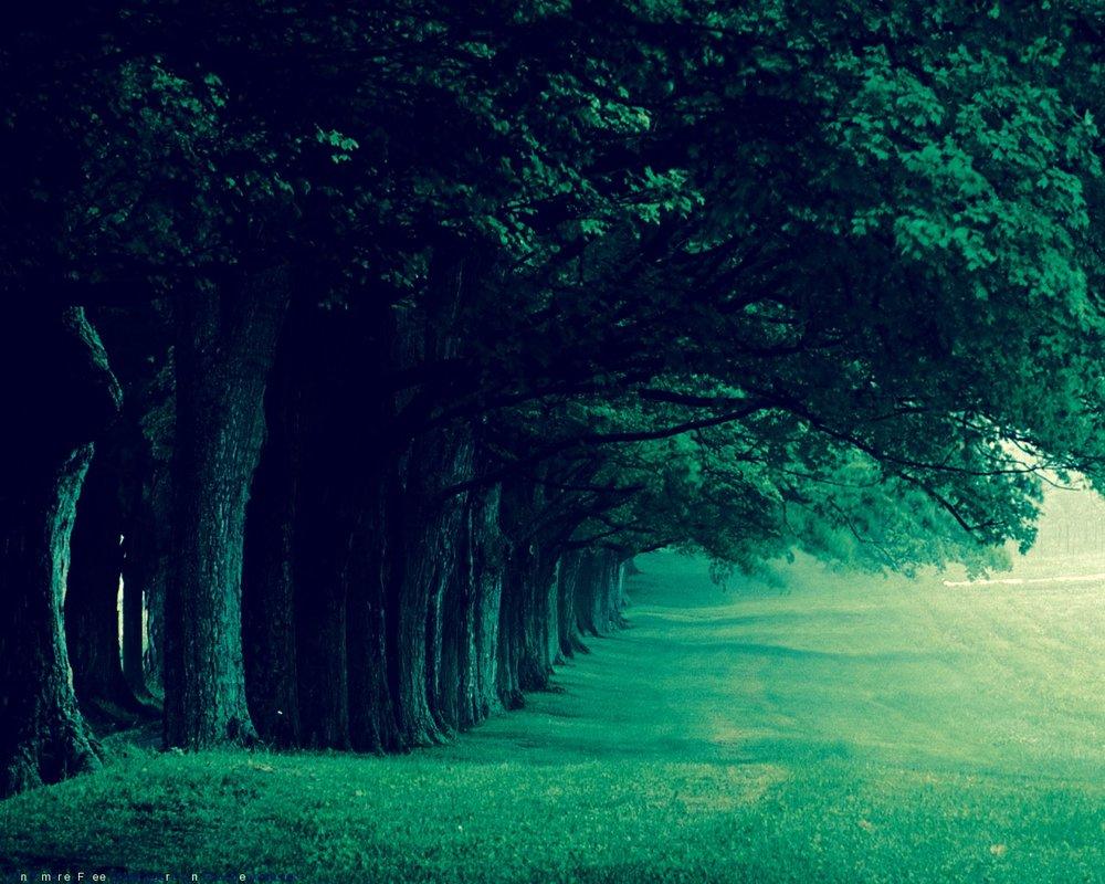 forest still.jpg