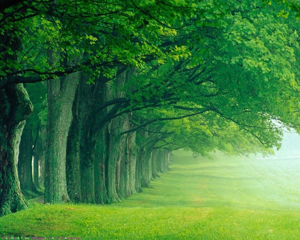 Green-forest-wallpaper.jpg