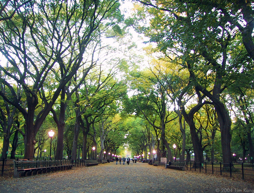 central_park_the_mall_wallpaper-other.jpg
