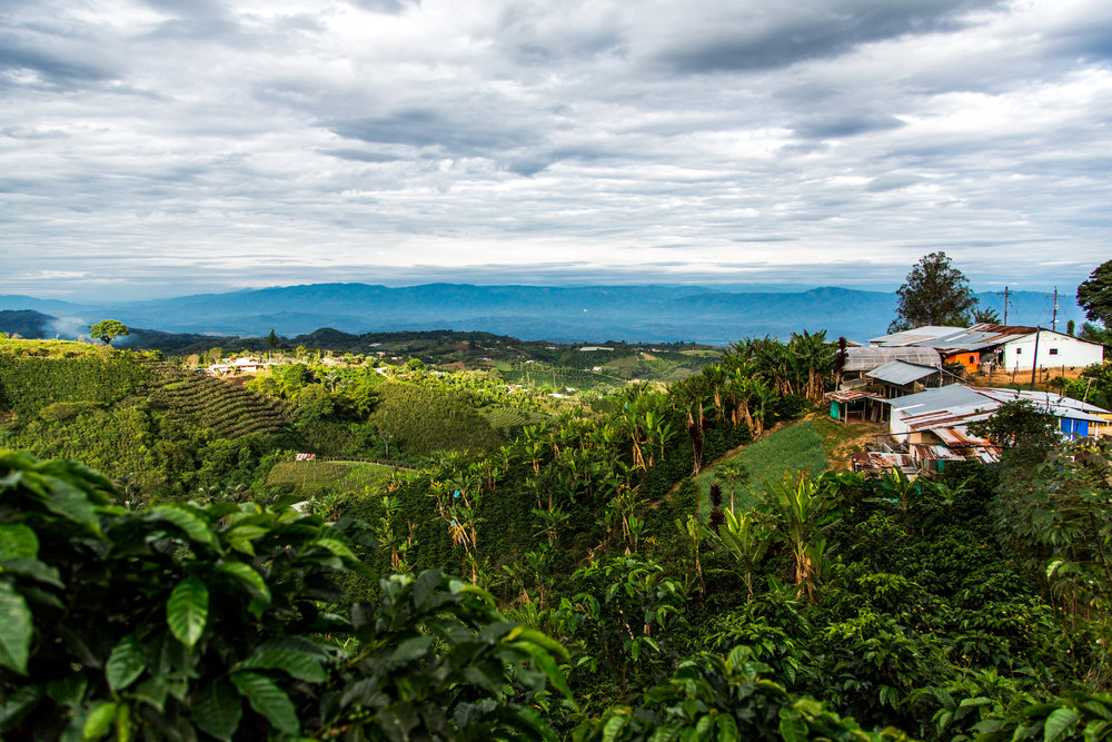 Sourcing Trip, Huila Colombia, September 12th 2018, 3:07pm
