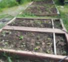 share-garden.png
