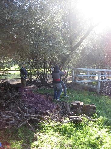 garden 2012 (18).JPG