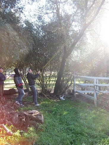 garden 2012 (1).JPG