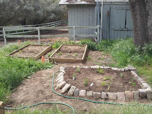 garden 2012 (6).jpg