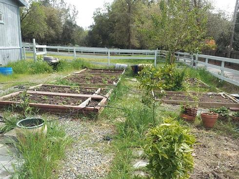 garden 2012 (7).jpg