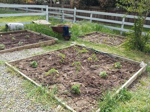 garden 2012 (9).jpg