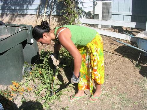 garden 2010 (3).JPG